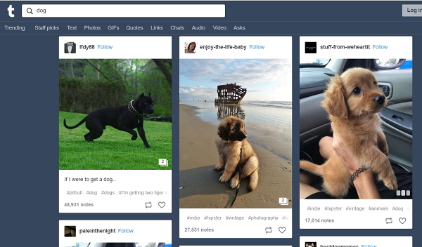 Tagged posts for a search for keyword -dog-