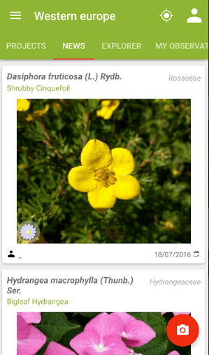 Screenshot of PlantNet app