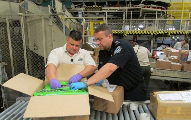 A customs agent and an agriculture specialist inspecting a package